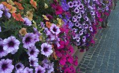 Blütenpracht in St. Martin