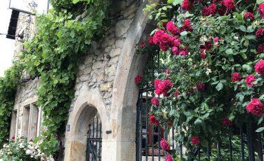 Rosenpracht in Gimmeldingen